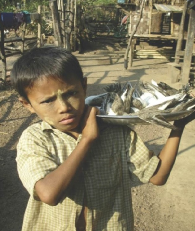 Young boy with shorebirds hunted for subsistence in the Bay of Martaban, Myanmar, Jan 2010 (Photo provided by the Biodiversity and Nature Conservation Association of Myanmar).