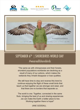 jane-goodall-and-shorebirds-english