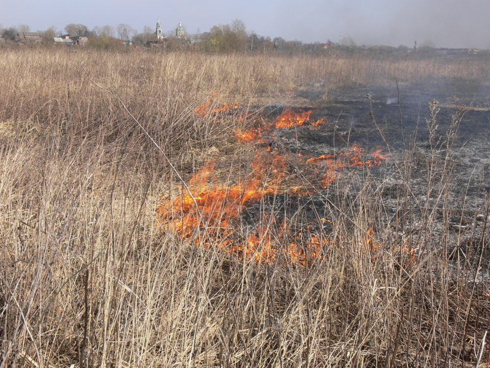 Spring burning of abandoned farmlands on the Vinogradovo Floodplain, Russia, is a serious threat to nesting waders (photo: Alexander Mischenko).