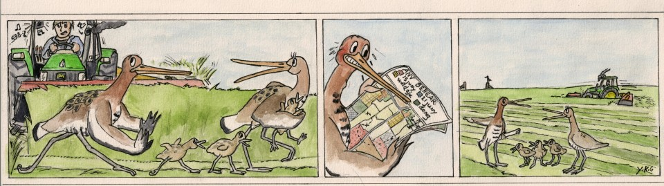 """The dangers of breeding late in Dutch meadows. Comic by Ysbrand Galama (reproduced with permission)  a href="""" https://www.bornmeer.nl/winkel/de-skriezemaaitiid"""" target=""""_blank""""> https://www.bornmeer.nl/winkel/de-skriezemaaitiid"""