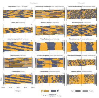 Actogram_1 - Martin bulla et al (2016) in Nature
